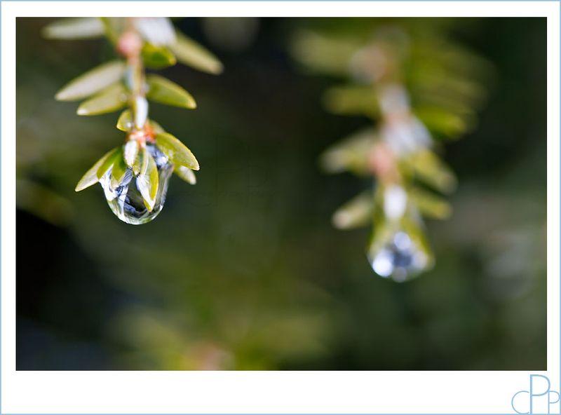 Water_drop_macro