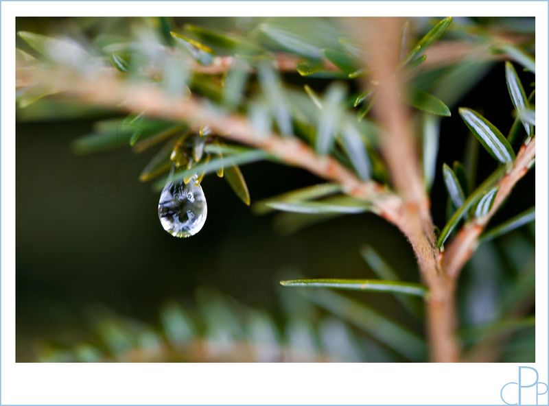 Water_drop_macro3