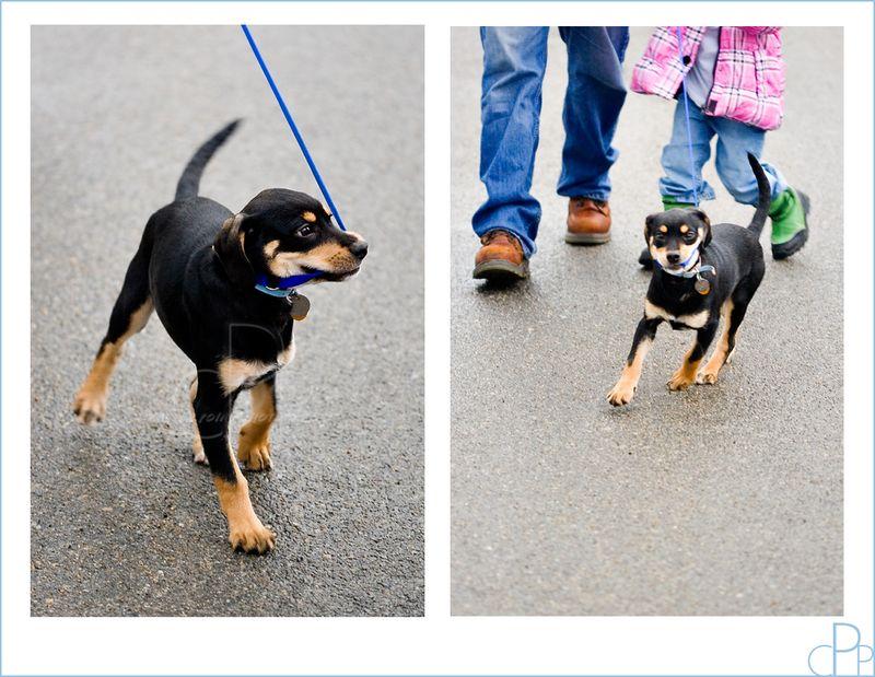 Puppy_walking_people