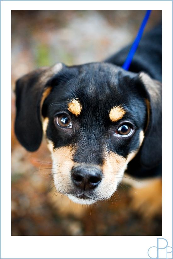 Puppy_portrait_nyc